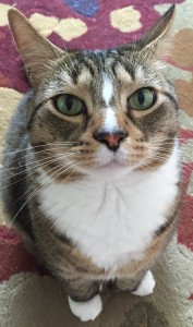 my-cat-jasper