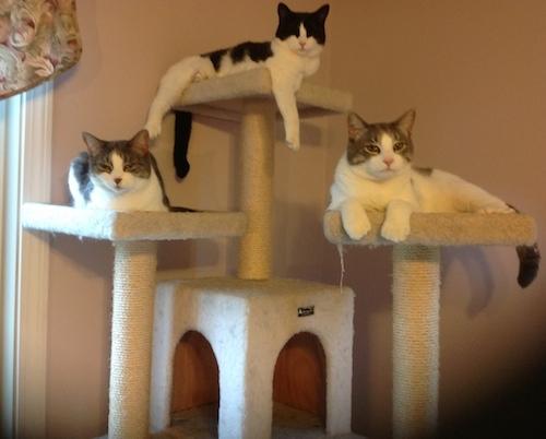 cats-climbing-tree