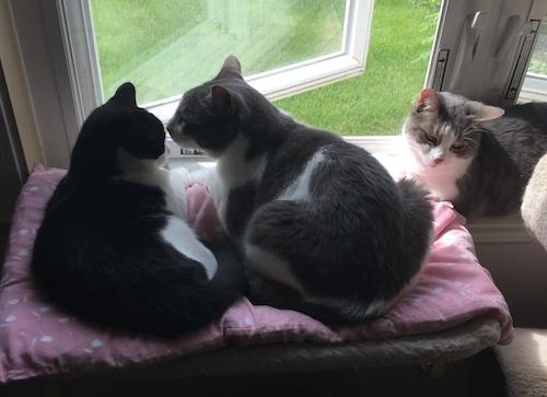 cat-insurance-plans