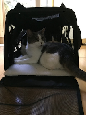pet-carrier-for-cat