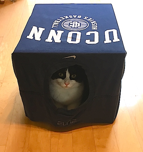diy-cat-bed
