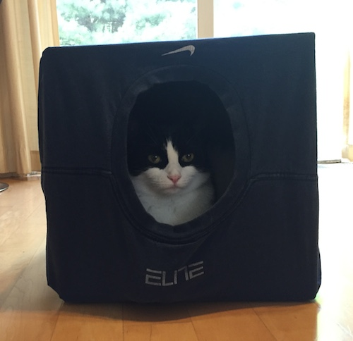 homemade-cat-bed