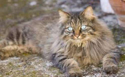 cat-before-pet-groomer-visit