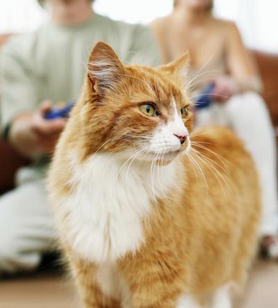 meijer cat litter