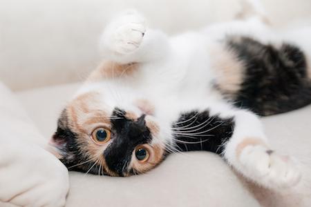 cat-care-tips