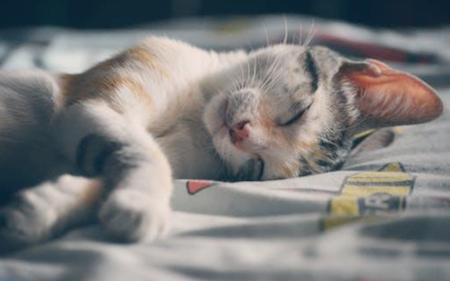 Tips for the First-Time Cat Owner